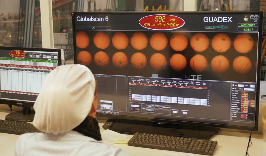 Guadex presentará su oferta en 'Fruit Logistica' con el apoyo de Extenda